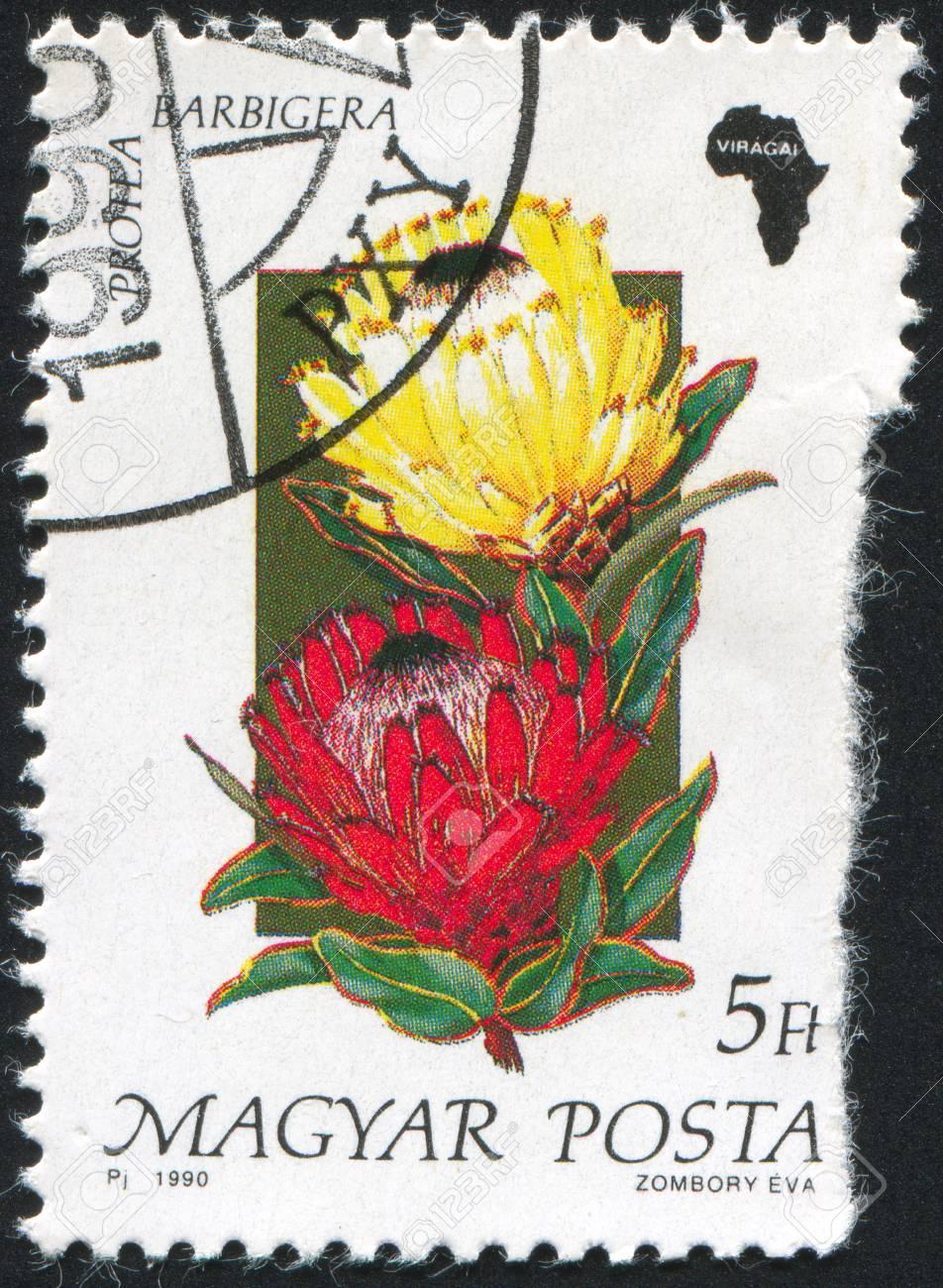 HUNGARY - CIRCA 1990: stamp printed by Hungary, shows Protea barbigera, circa 1990 Stock Photo - 9957721