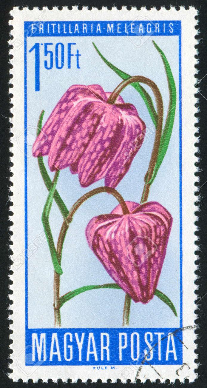 HUNGARY - CIRCA 1967: stamp printed by Hungary, shows Snakes head, circa 1967 Stock Photo - 11176163