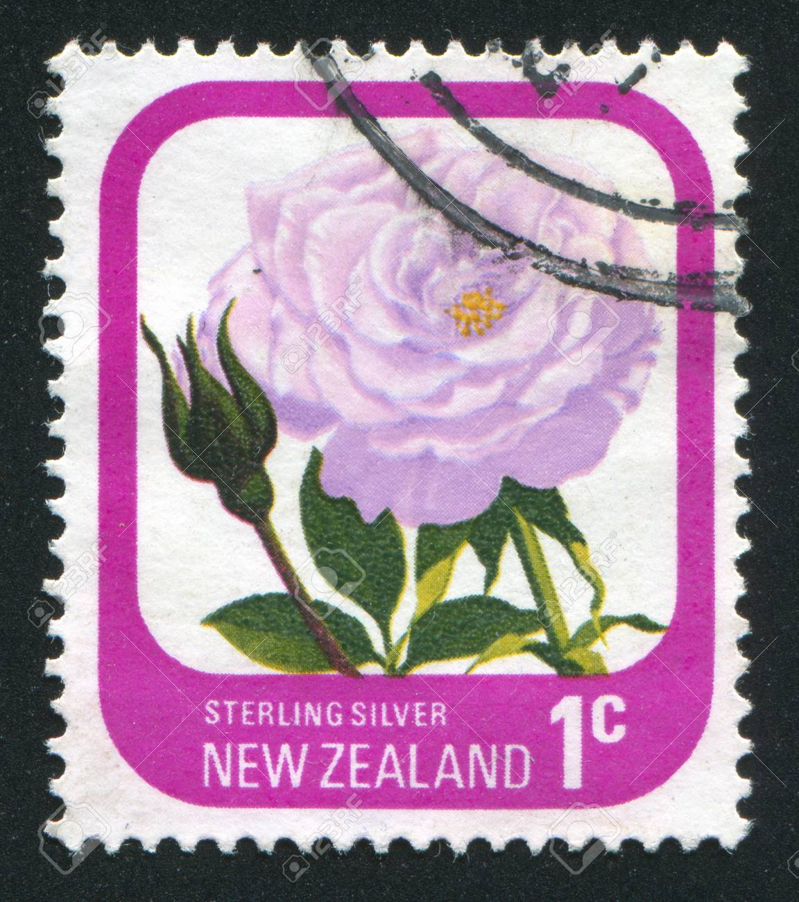 NEW ZEALAND - CIRCA 1975: stamp printed by New Zealand, shows flower  Rose Streling, circa 1975 Stock Photo - 12588700