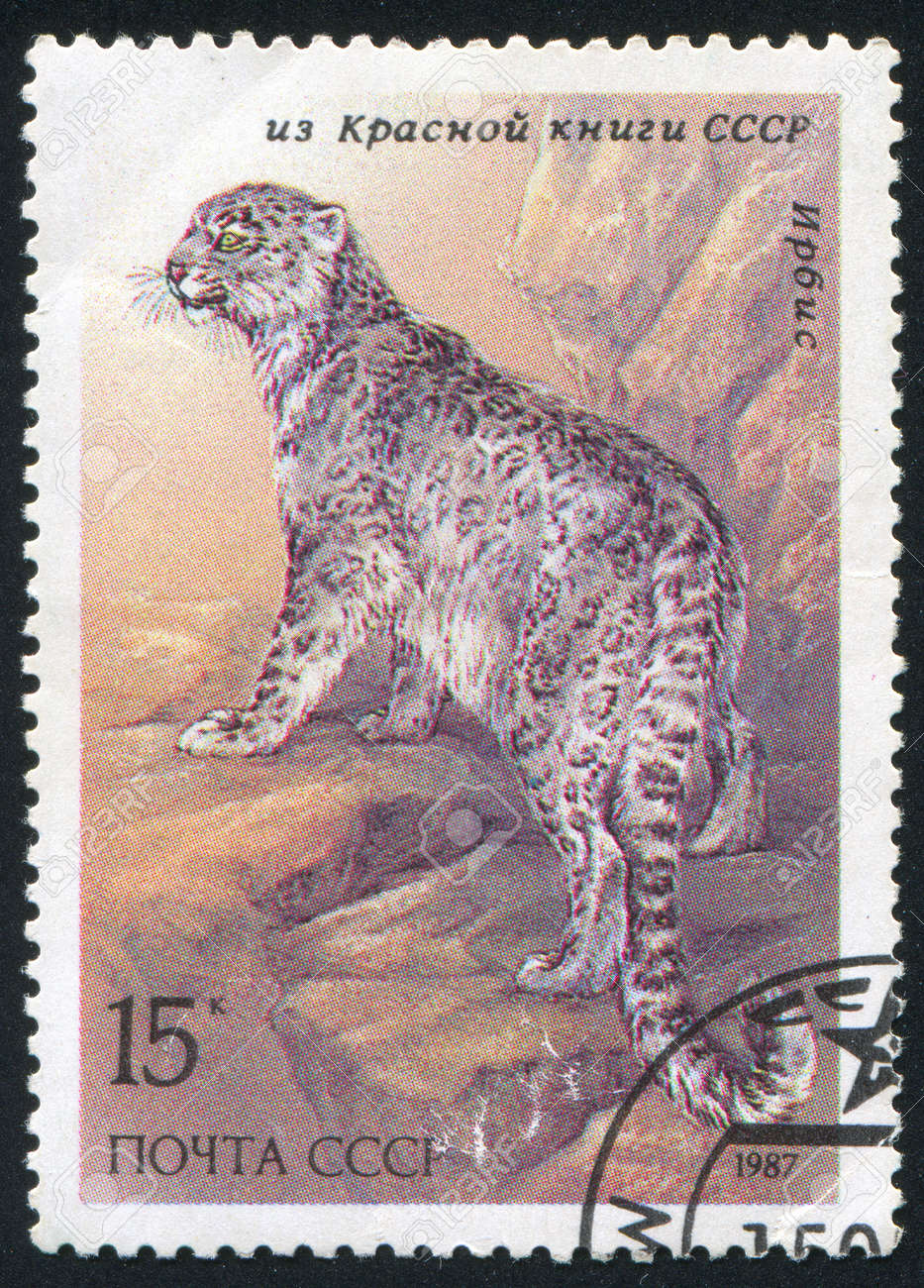 RUSSIA - CIRCA 1987: stamp printed by Russia, shows Snow leopard, circa 1987 Stock Photo - 13591760