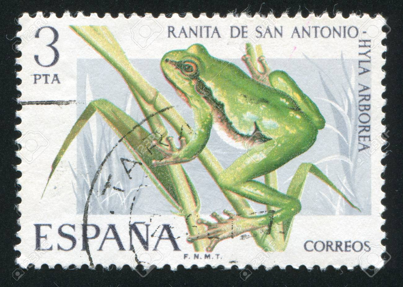 SPAIN - CIRCA 1975: stamp printed by Spain, shows Tree Toad, circa 1975 Stock Photo - 16745404