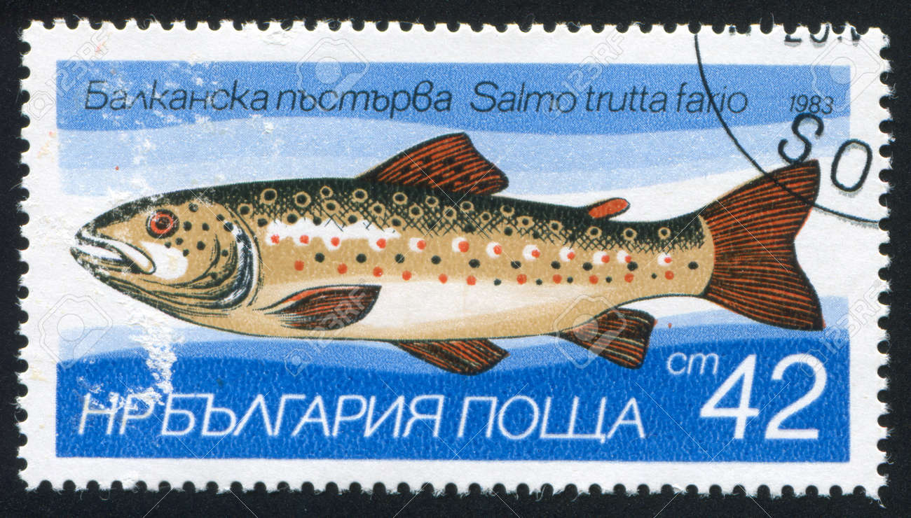 BULGARIA - CIRCA 1983: stamp printed by Bulgaria, shows Trout, circa 1983 Stock Photo - 20527720