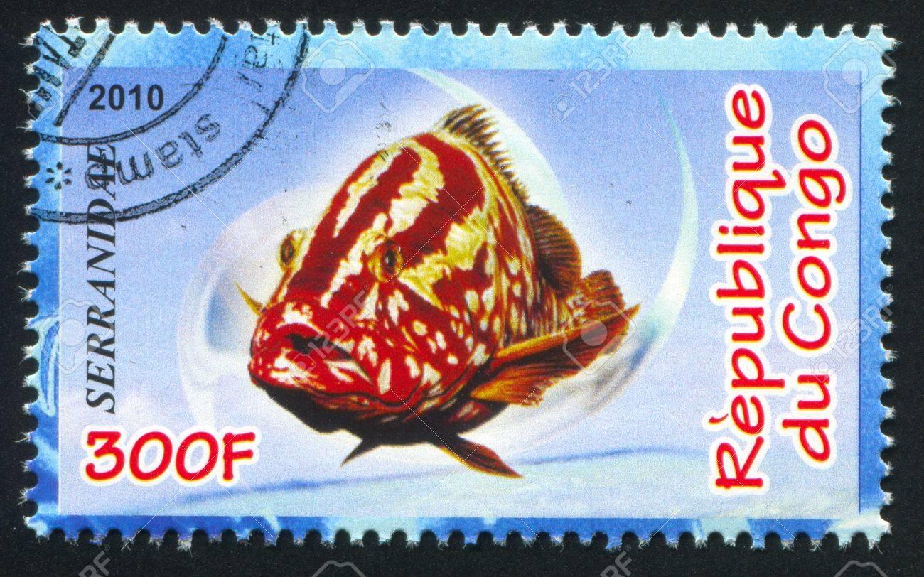 CONGO - CIRCA 2010: stamp printed by Congo, shows Serranidae, circa 2010 Stock Photo - 21333522