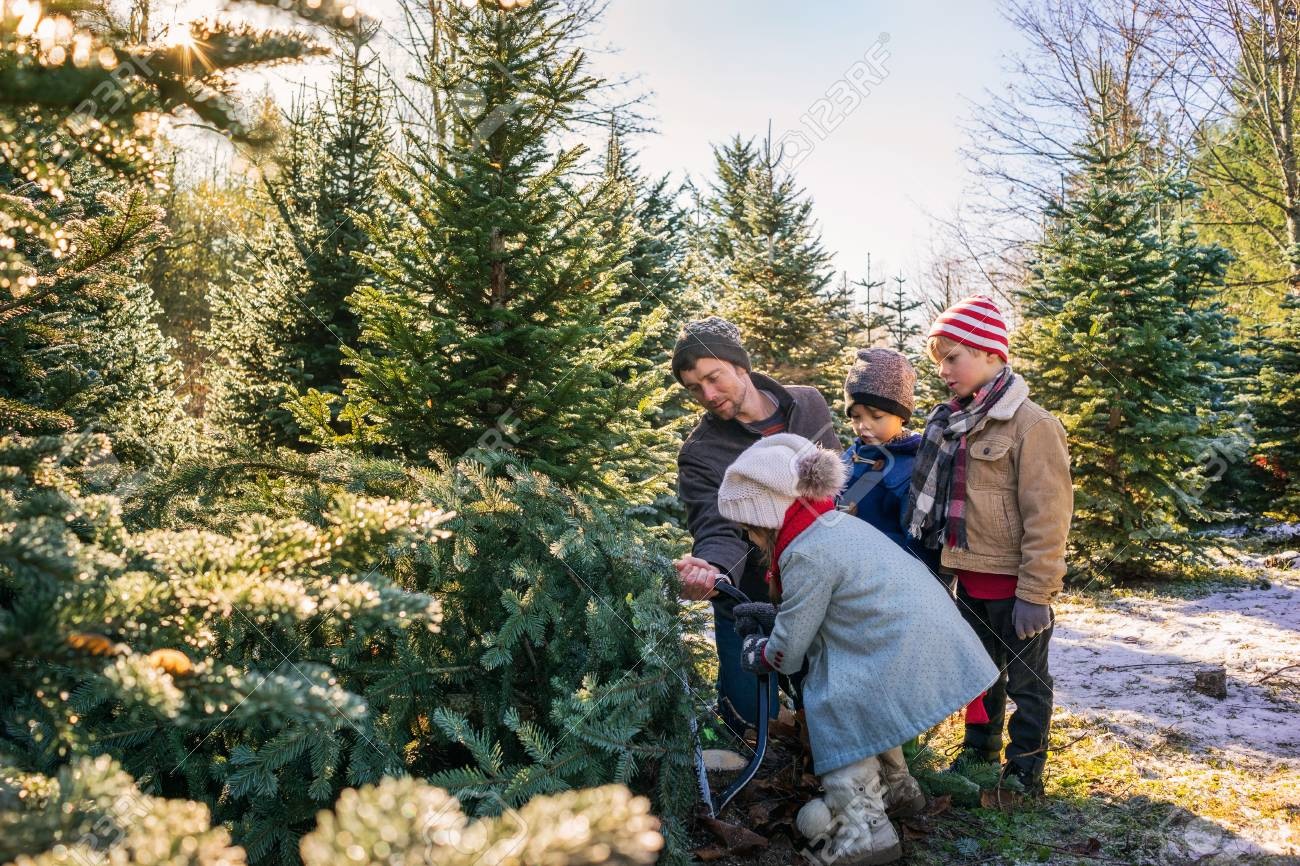 Cut Down Christmas Tree Near Me.Father With Three Children Cutting Down Christmas Tree