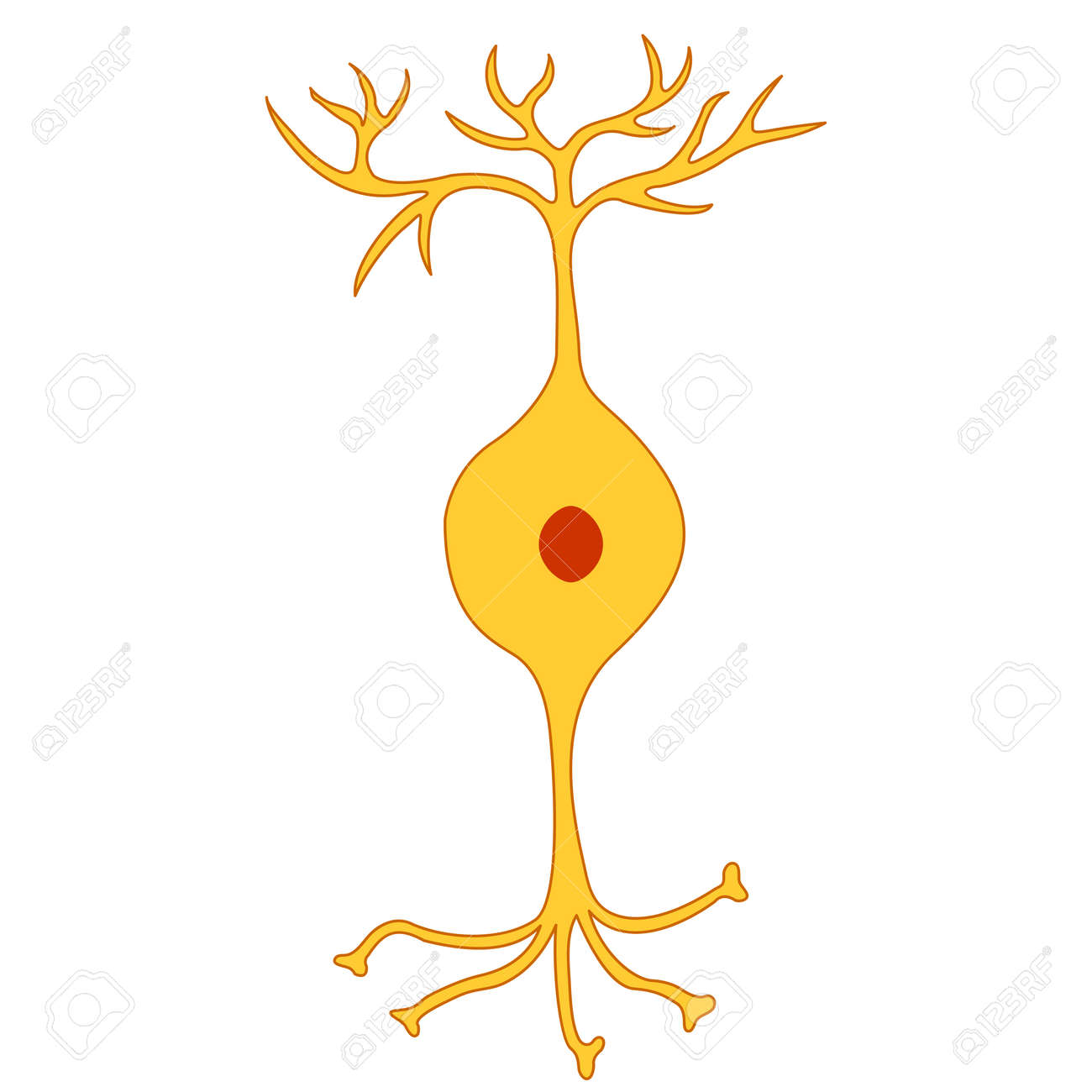 Neurona Bipolar, Neurona Célula Nerviosa, Aislado En Fondo Blanco ...