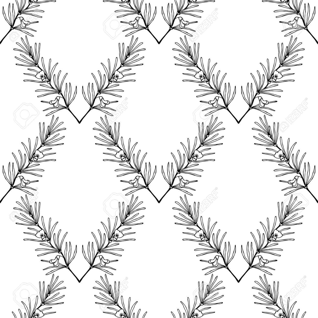 Rooibos Tea Plant Leaf Flower Seamless Pattern Hand Drawn Ink Sketch Illustration
