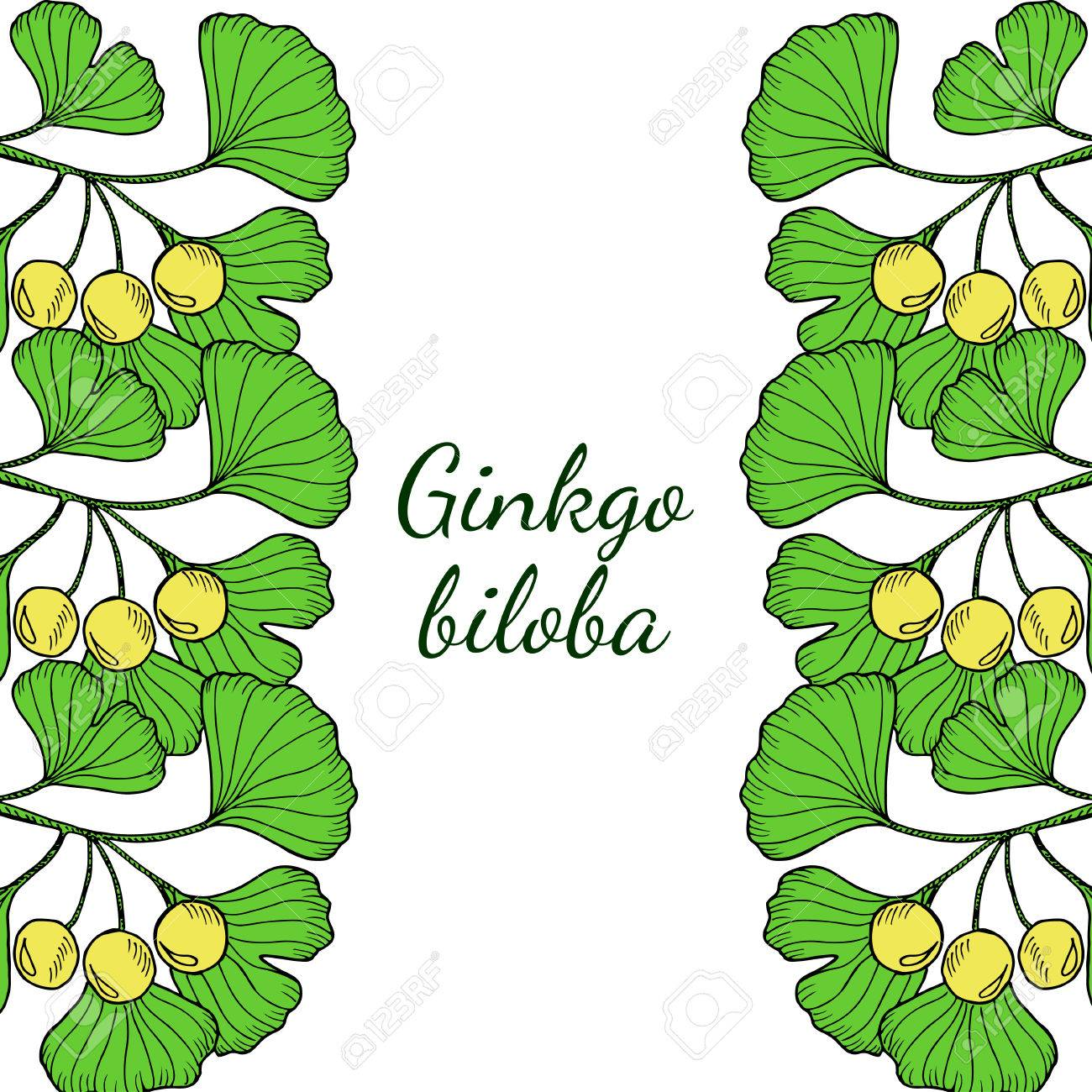 Hand Drawn Medicinal Plant Ginkgo Biloba Tree. Branches Vertical ...