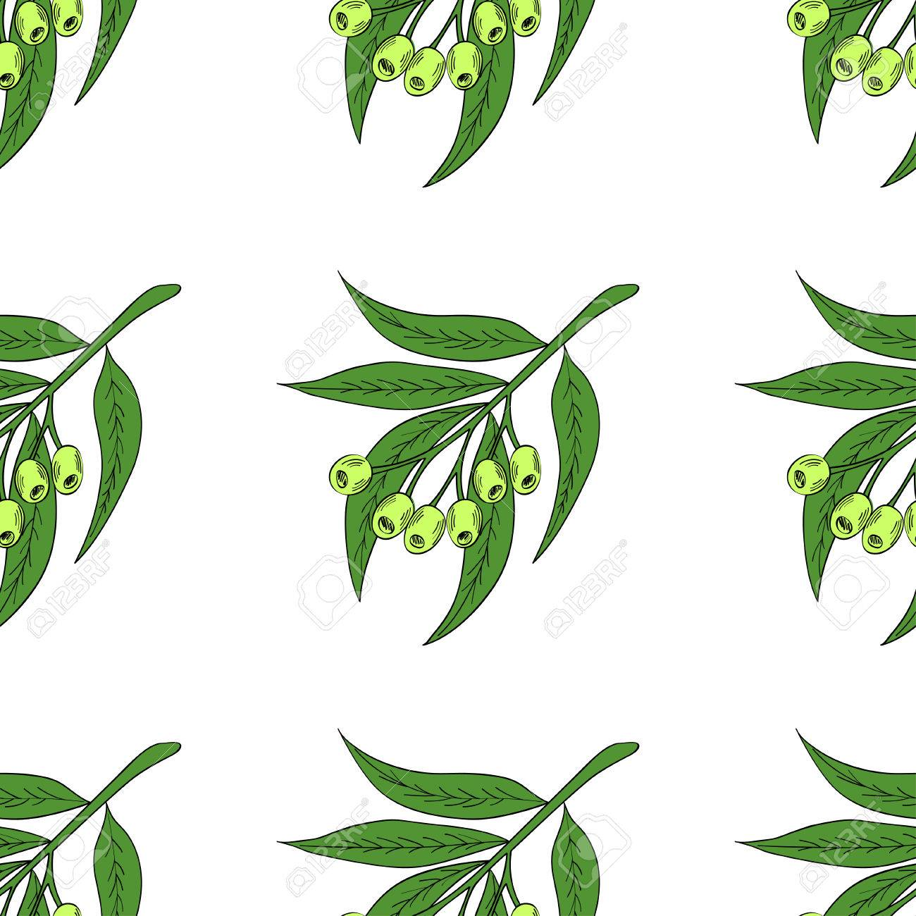 Hand Drawn Eucalyptus Leaves And Fruits Eucalyptus Plant Branch Royalty Free Cliparts Vectors And Stock Illustration Image 78018562