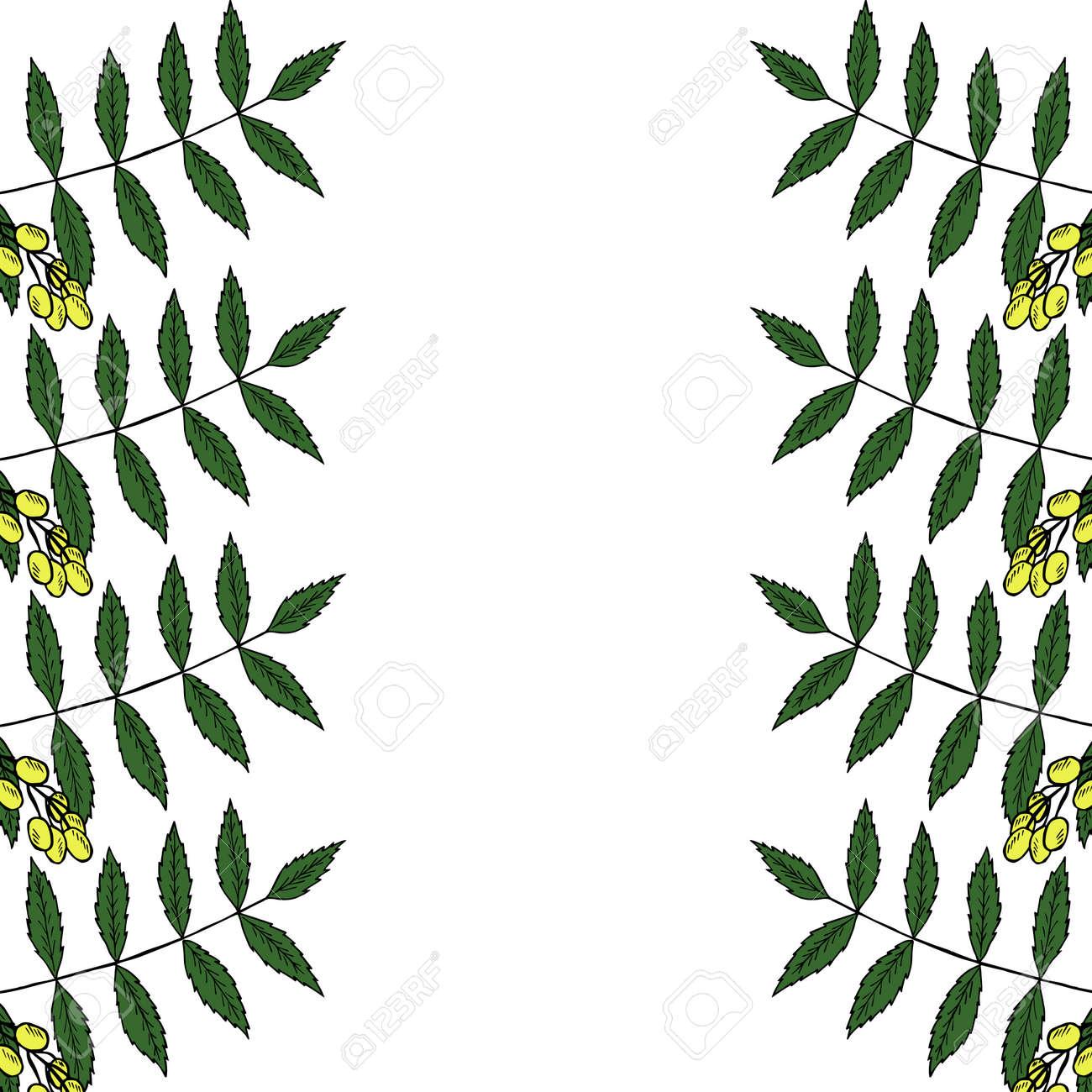 neem or nimtree medicinal plant frame border ayurvedic herb rh 123rf com free herb border clip art free herb border clip art