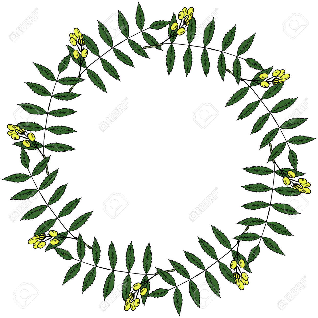 Neem Or Nimtree, Medicinal Plant. Frame, Border. Ayurvedic Herb ...