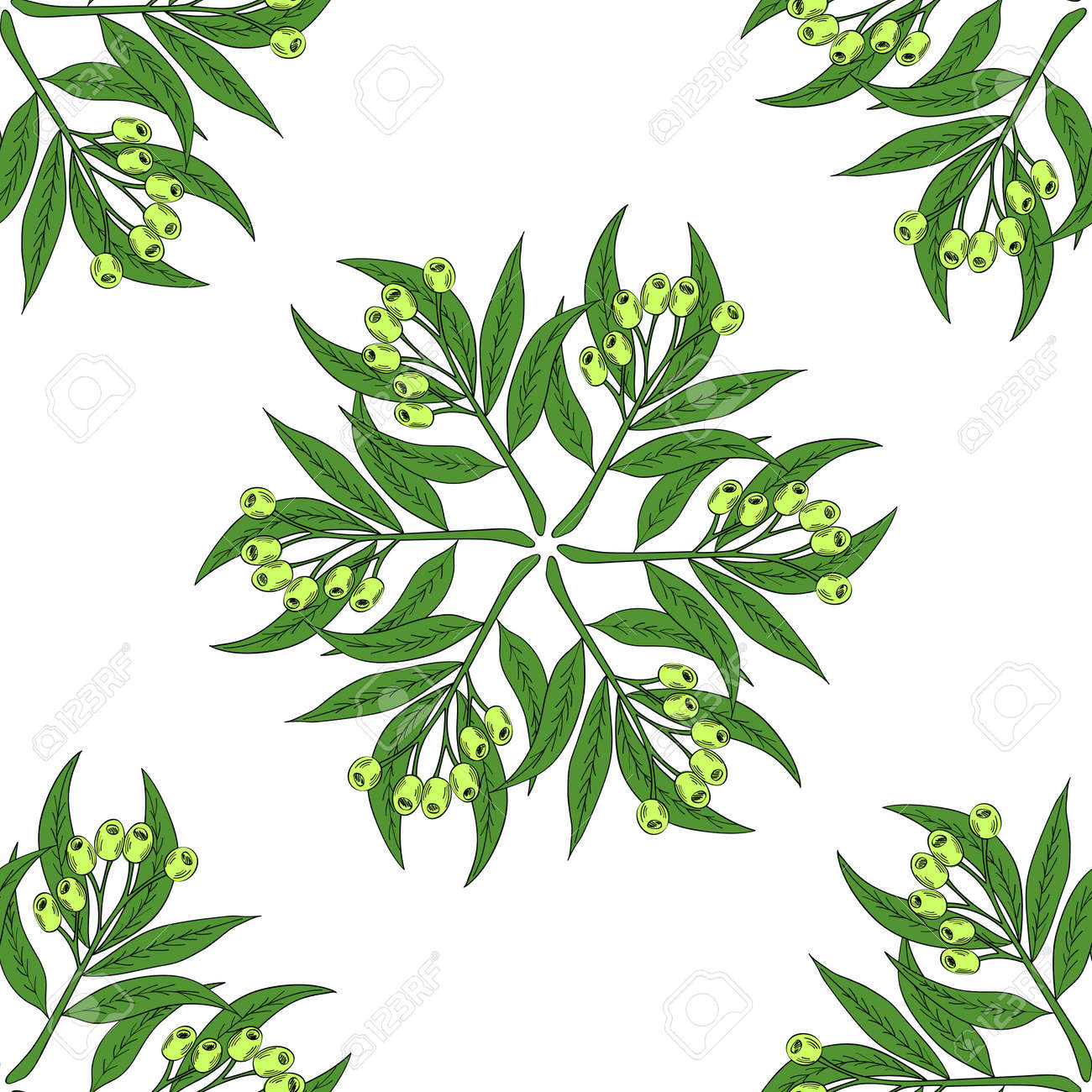 Hand Drawn Eucalyptus Leaves And Fruits Eucalyptus Plant Branch Royalty Free Cliparts Vectors And Stock Illustration Image 78018546