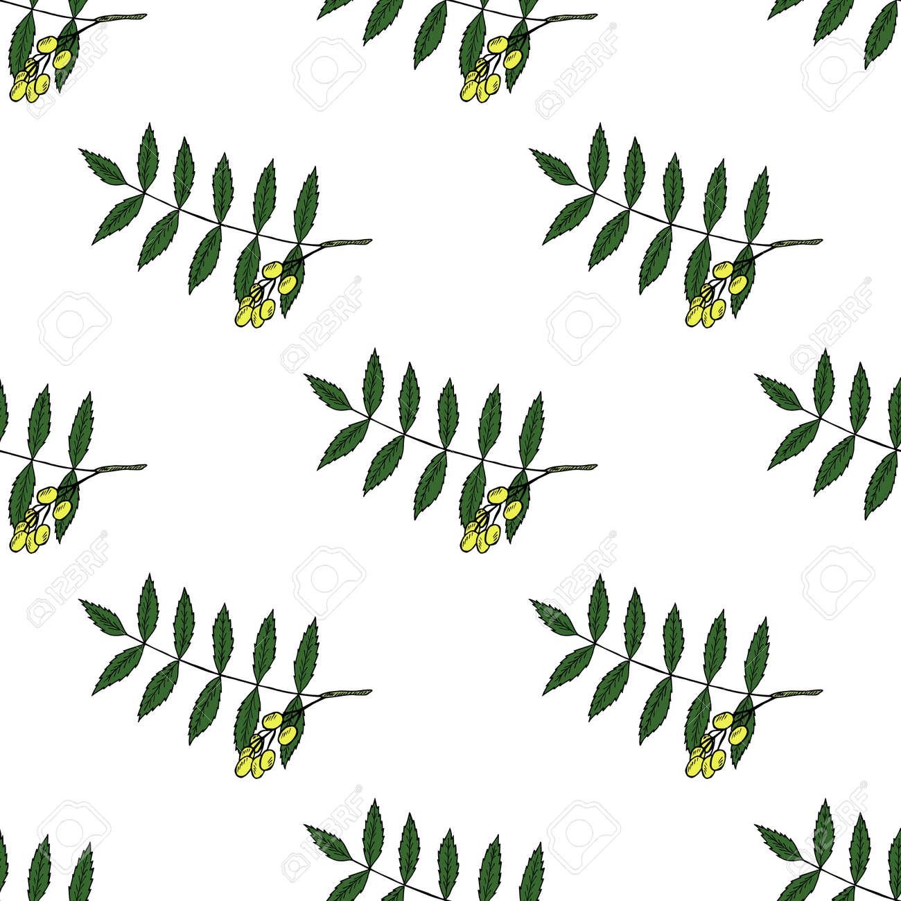 Neem, Nimtree, Heilpflanze. Ayurvedisches Kraut. Hand Zeichnen Tinte ...