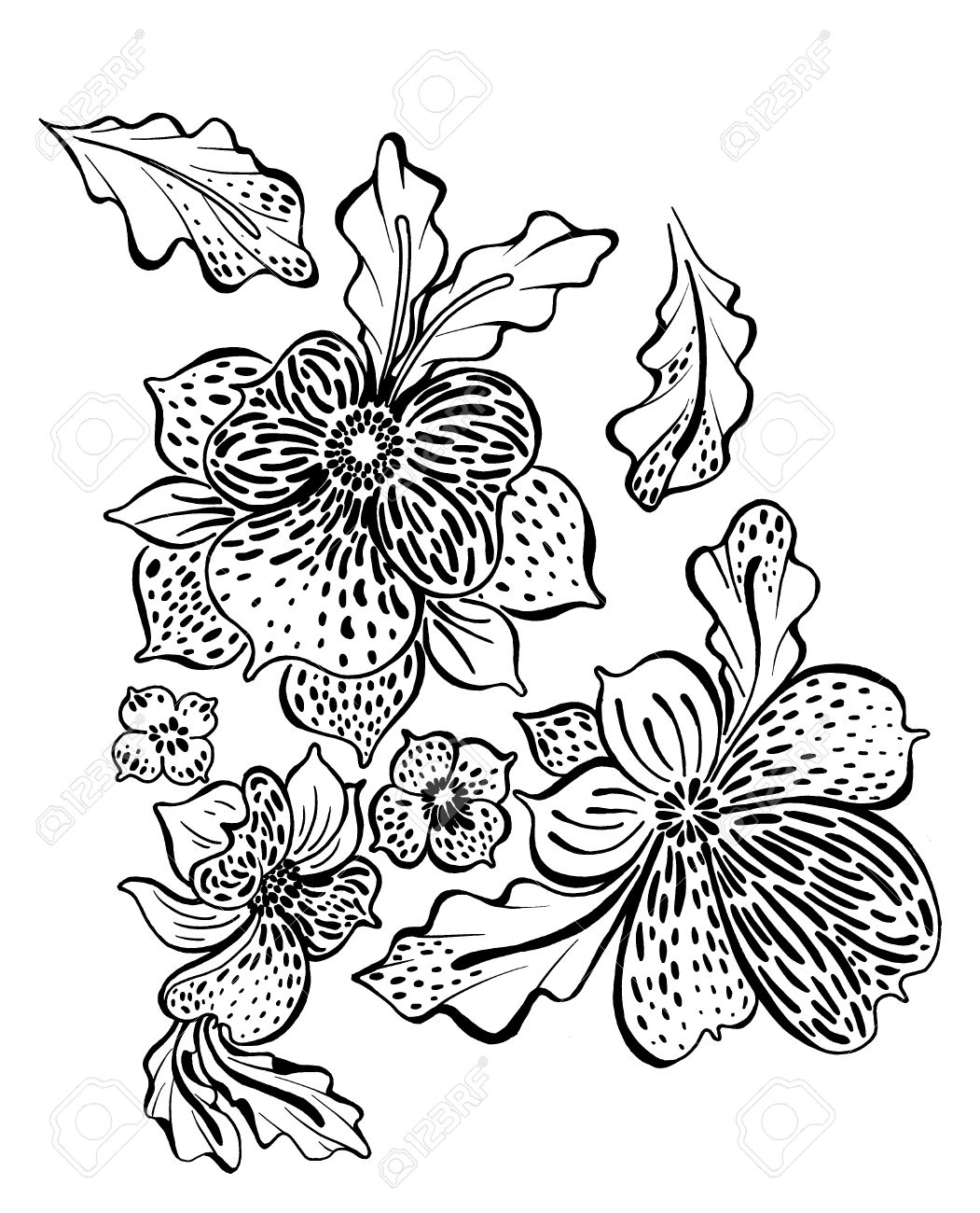 Outline drawing of exotic flowers orchids and leaves stock photo 57003336