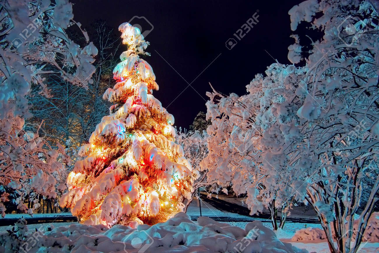 Snow Covered Christmas Tree At Night, With Colorful Lights Stock ...