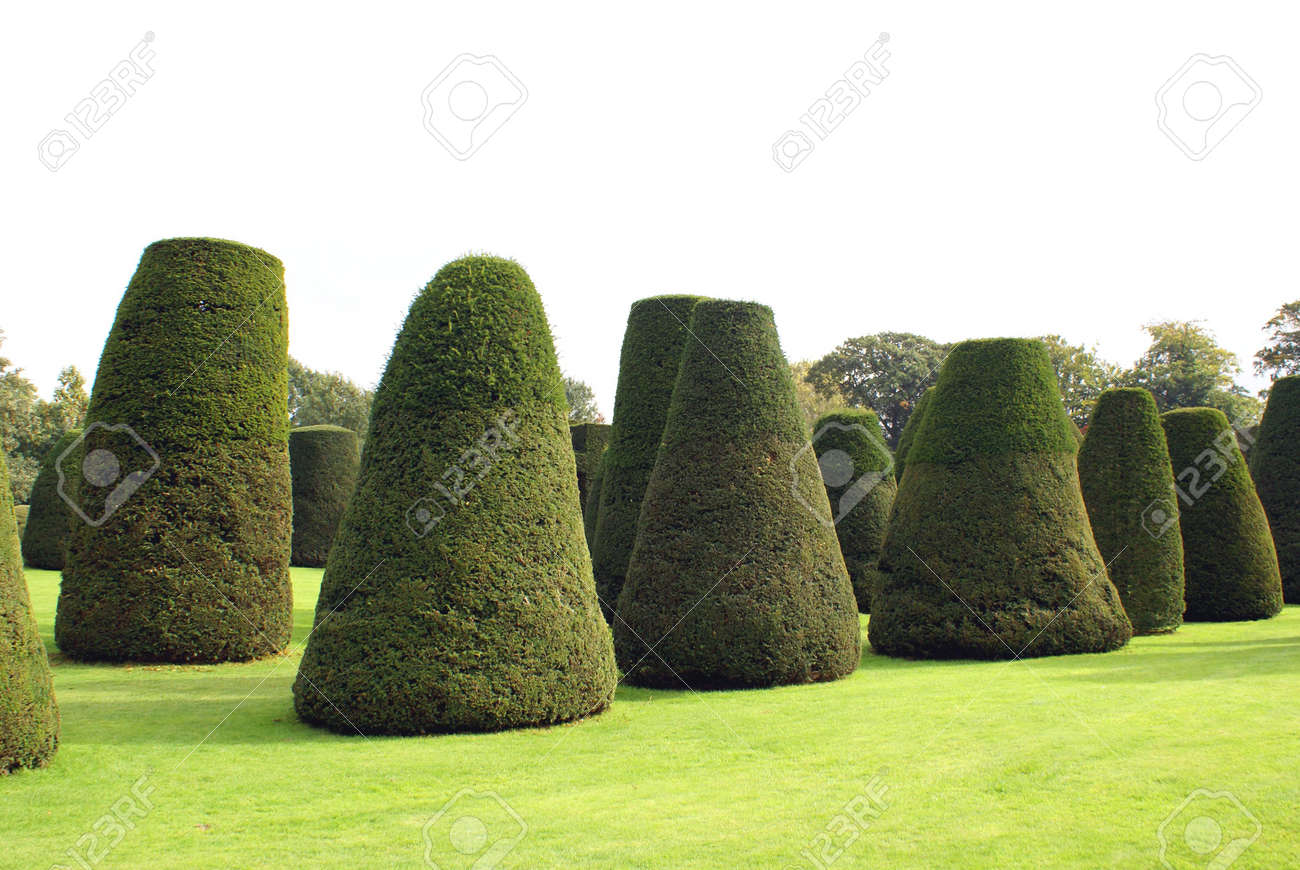 Yew Topiary Trees Garden Stock Photo Picture And Royalty Free Image Image 36584942