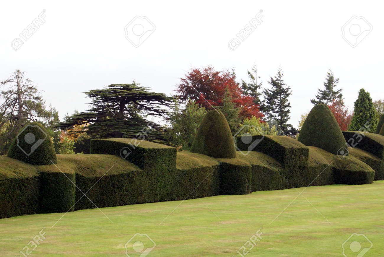 Yew Topiary Hedge Stock Photo Picture And Royalty Free Image Image 39366740
