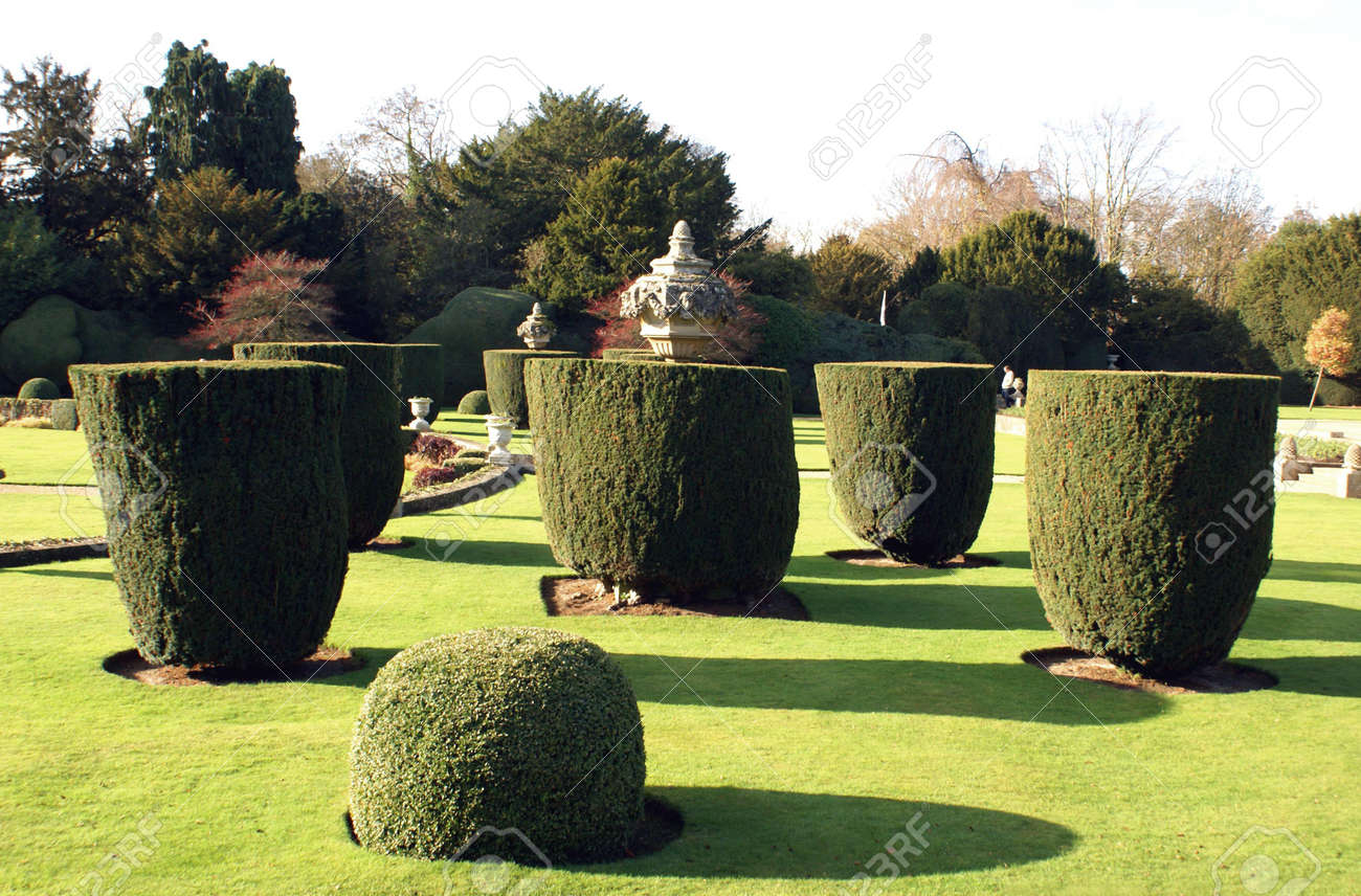 Yew Topiary Trees Stock Photo Picture And Royalty Free Image Image 43189600