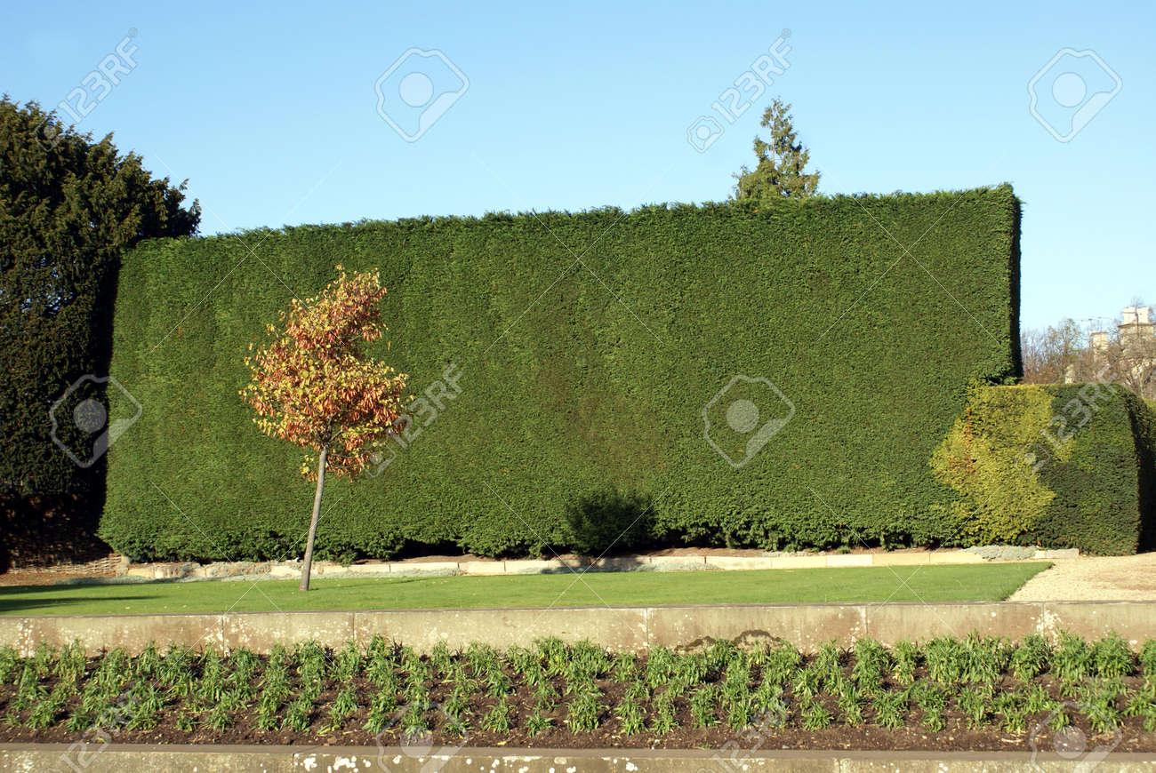 Gartenhecke Lizenzfreie Fotos Bilder Und Stock Fotografie Image