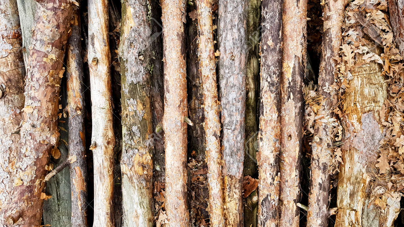 Firewood on big pile, top view, beautiful wooden logs. background of stacked logs top view from the drone. pile stacked natural sawn wooden logs background. - 173011016