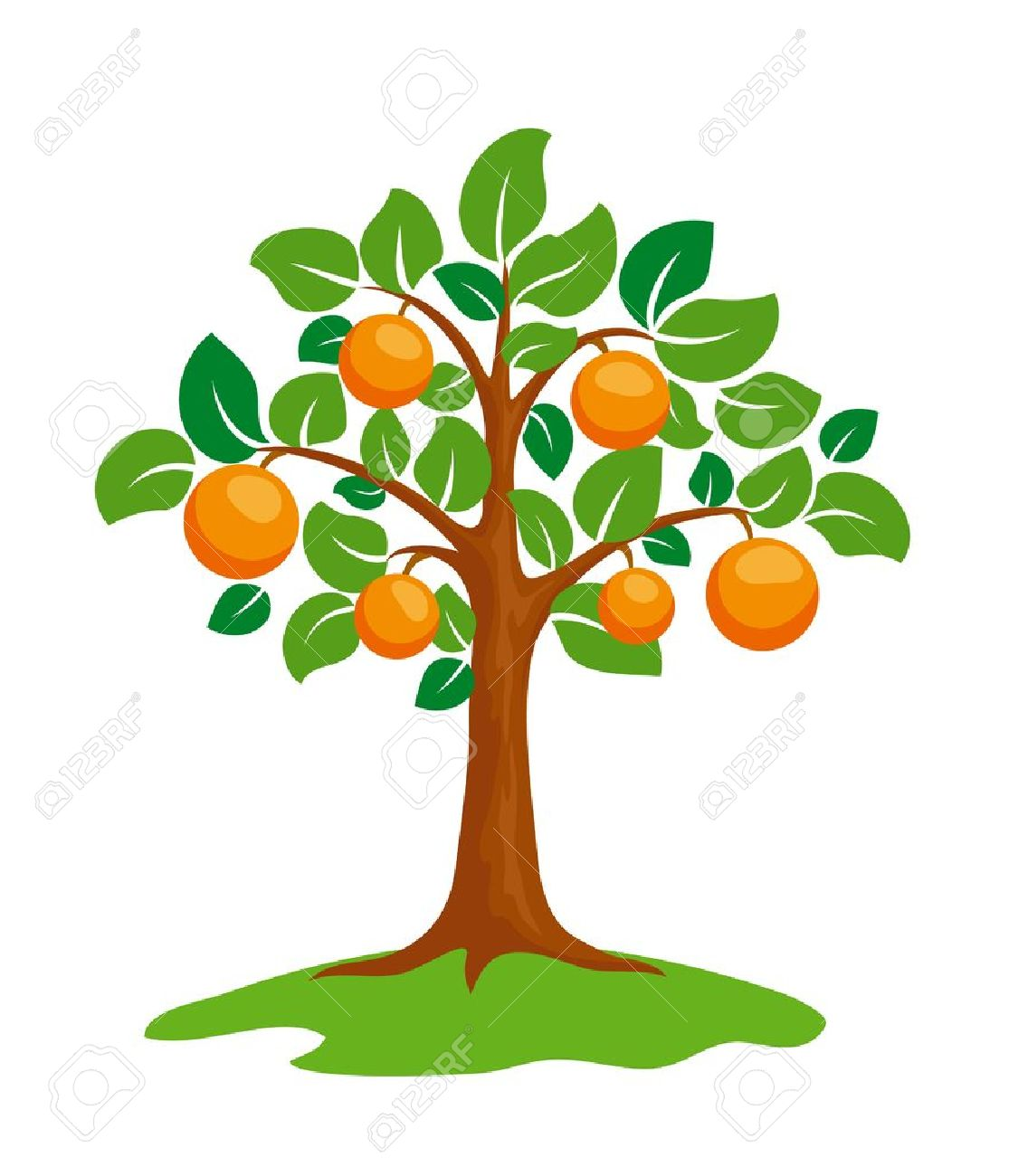 Stylized orange-tree  Orange Tree Vector