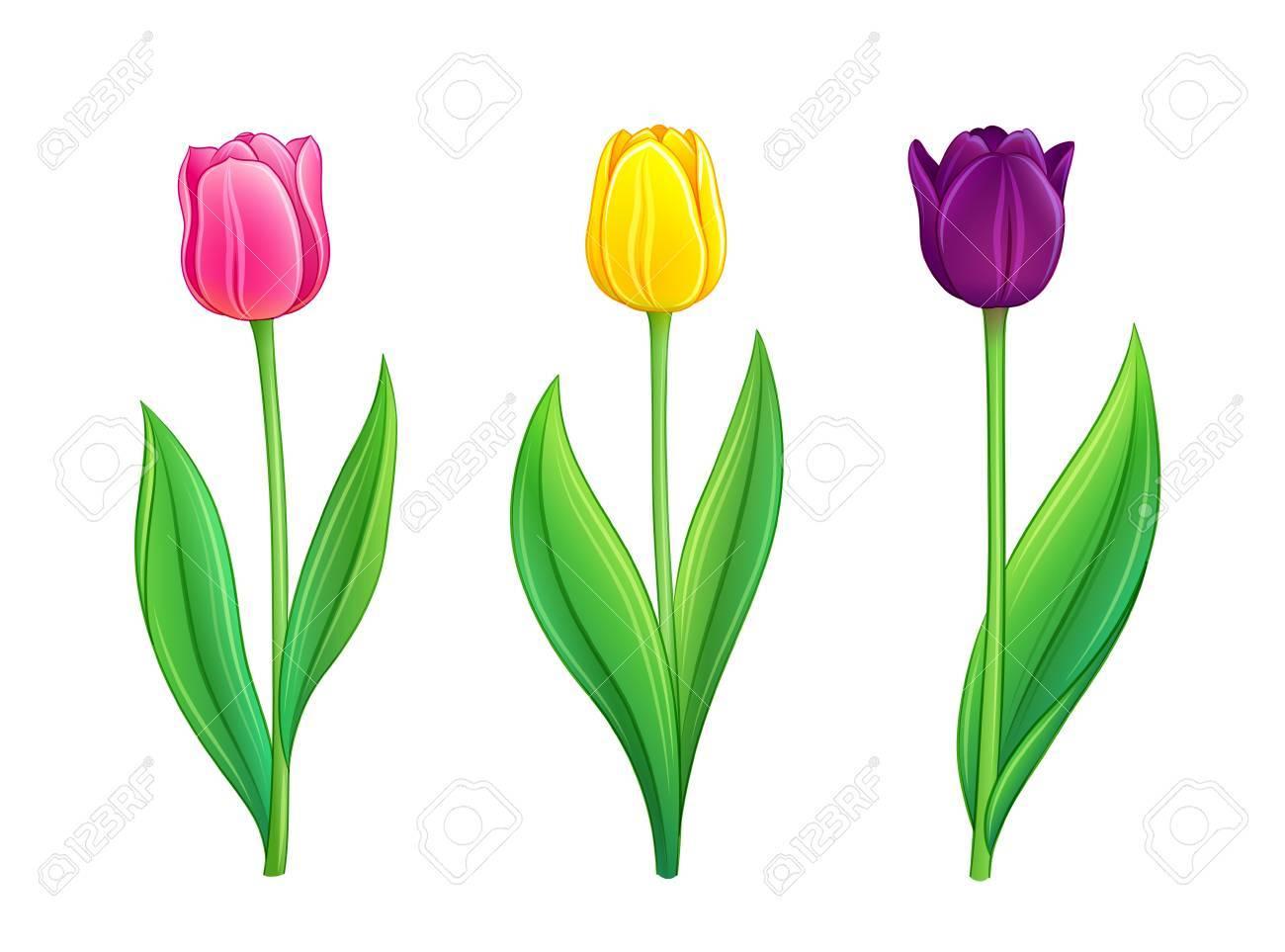 Set of tulips. Vector illustration in eps10 format Stock Vector - 18248339