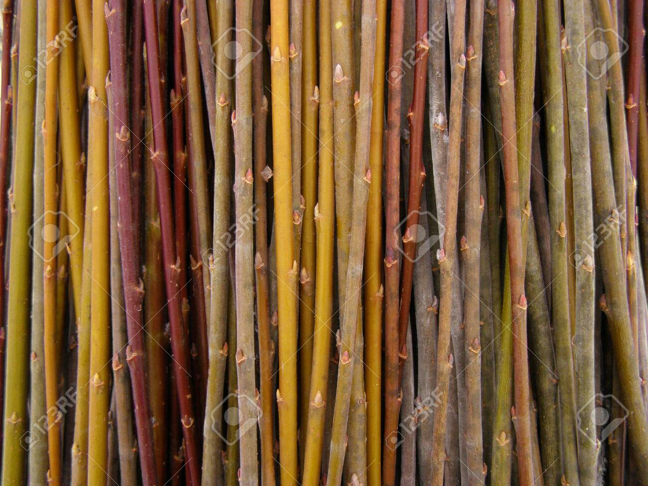 A Lot Of Willow Twigs Raw Material For Basket Weaving Stock Photo Picture And Royalty Free Image Image 133661857