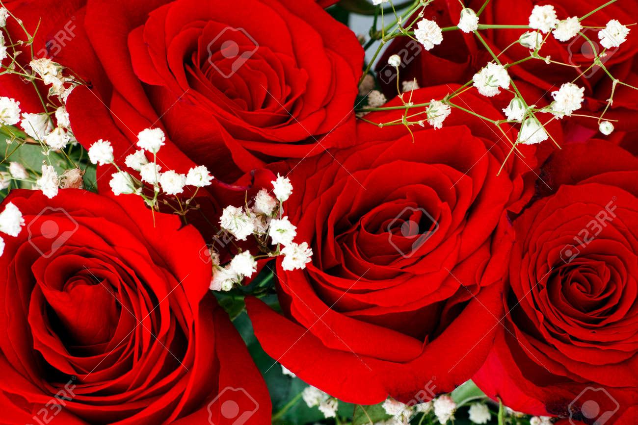 Resultado de imagen para flores blancas y rojas