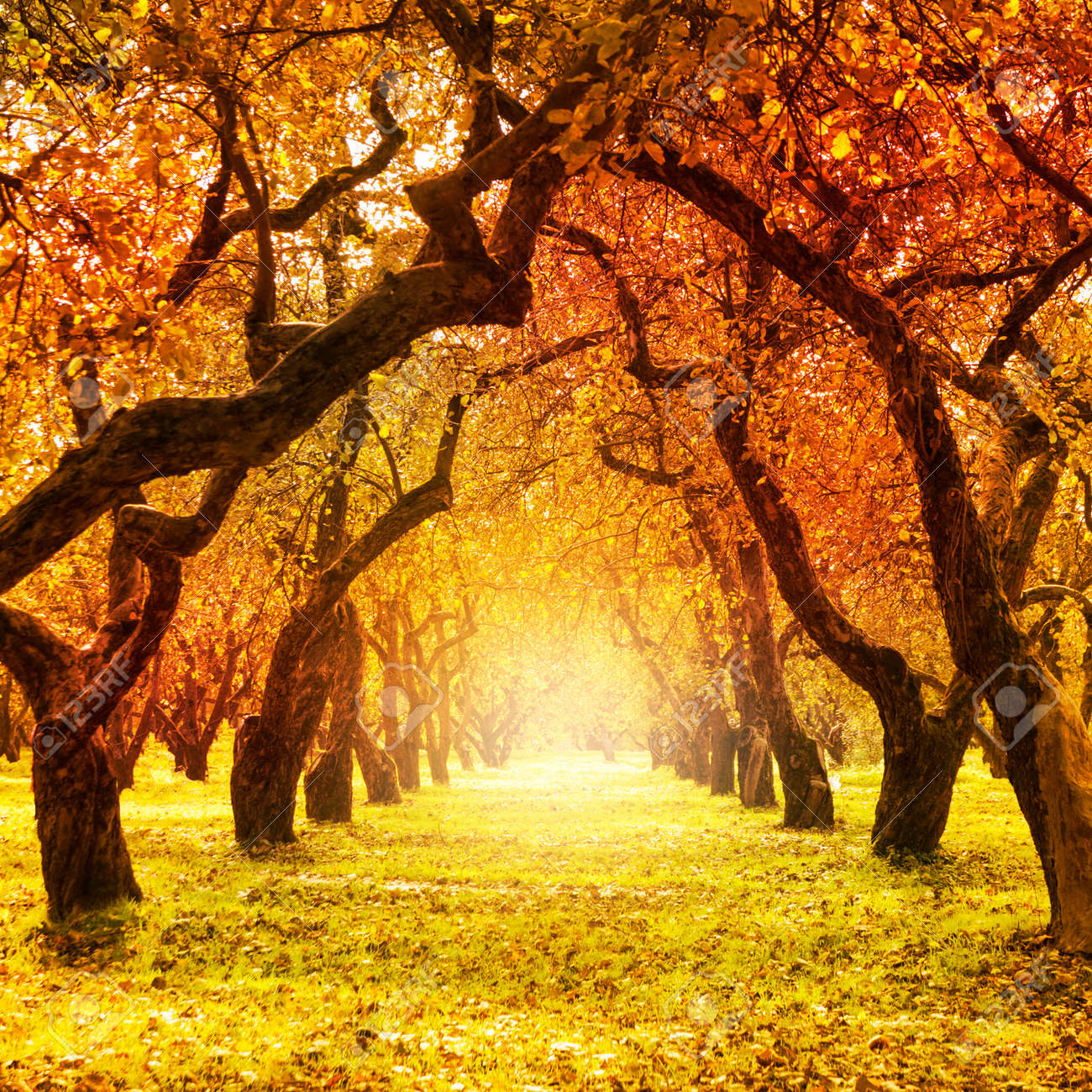 Autumn Fall Autumnal Park Autumn Trees And Leaves Stock Photo