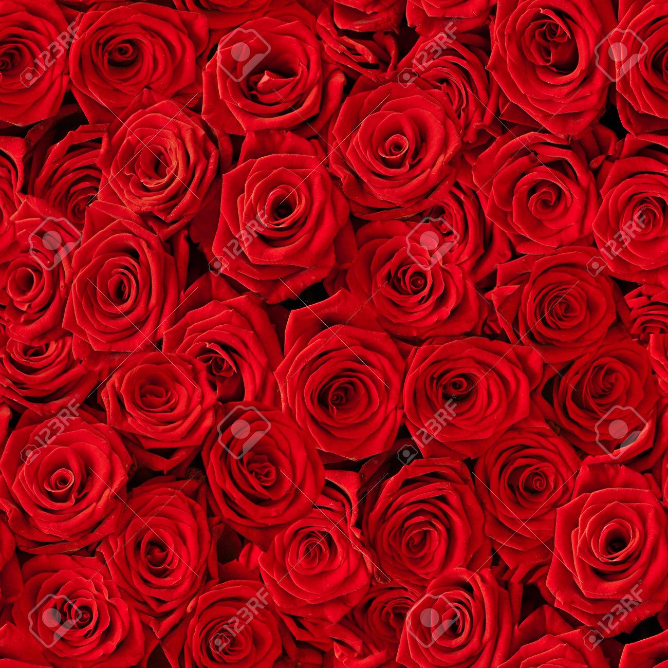 Un Montón De Rosas Rojas Naturales De Fondo Sin Fisuras Fotos