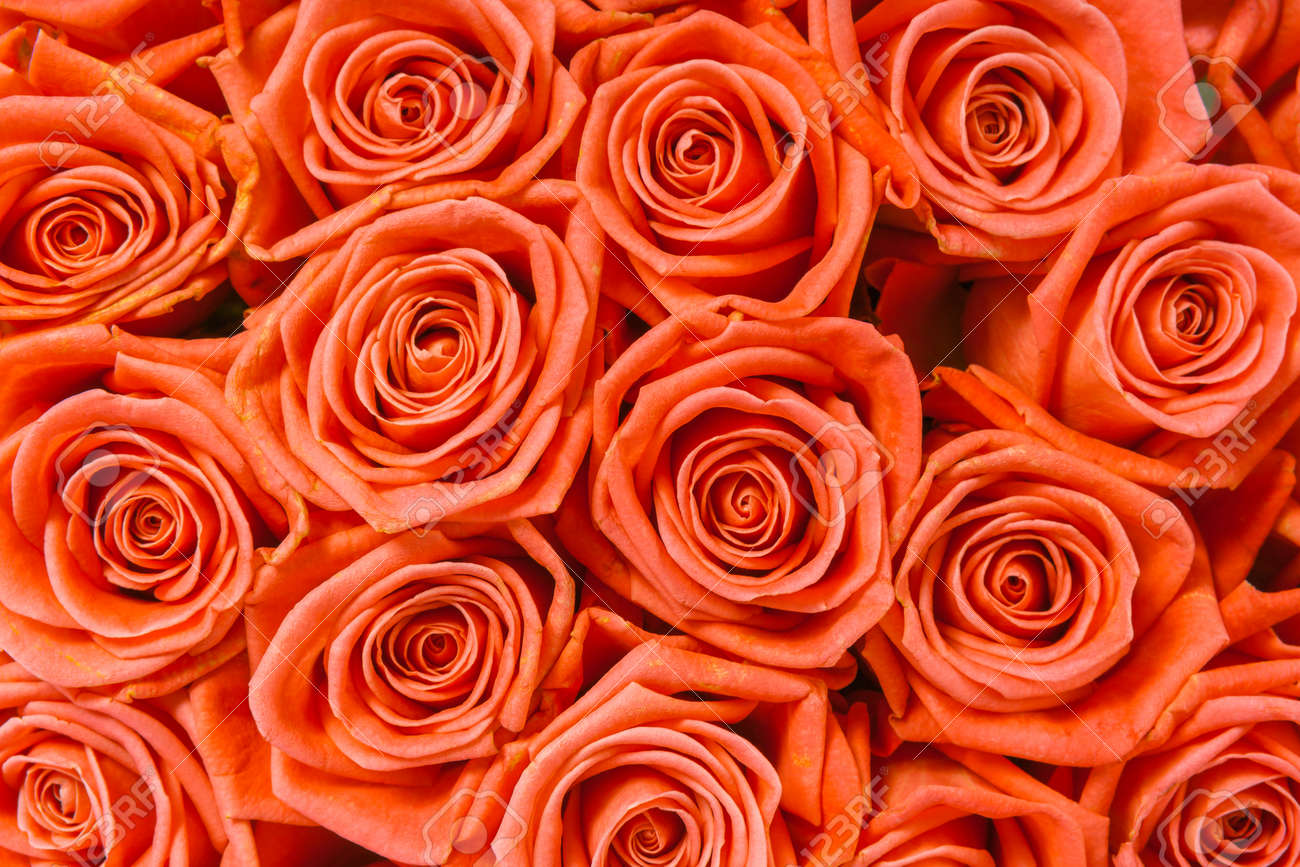 A bunch of orange roses background - 46112379