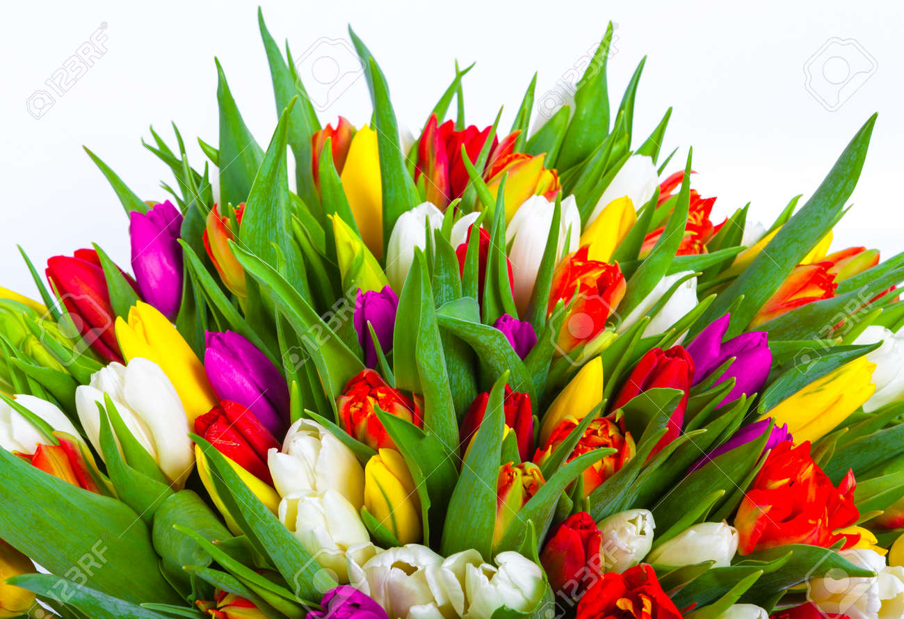 Bouquet of multicolor tulips fresh spring flowers stock photo bouquet of multicolor tulips fresh spring flowers stock photo 72730553 mightylinksfo