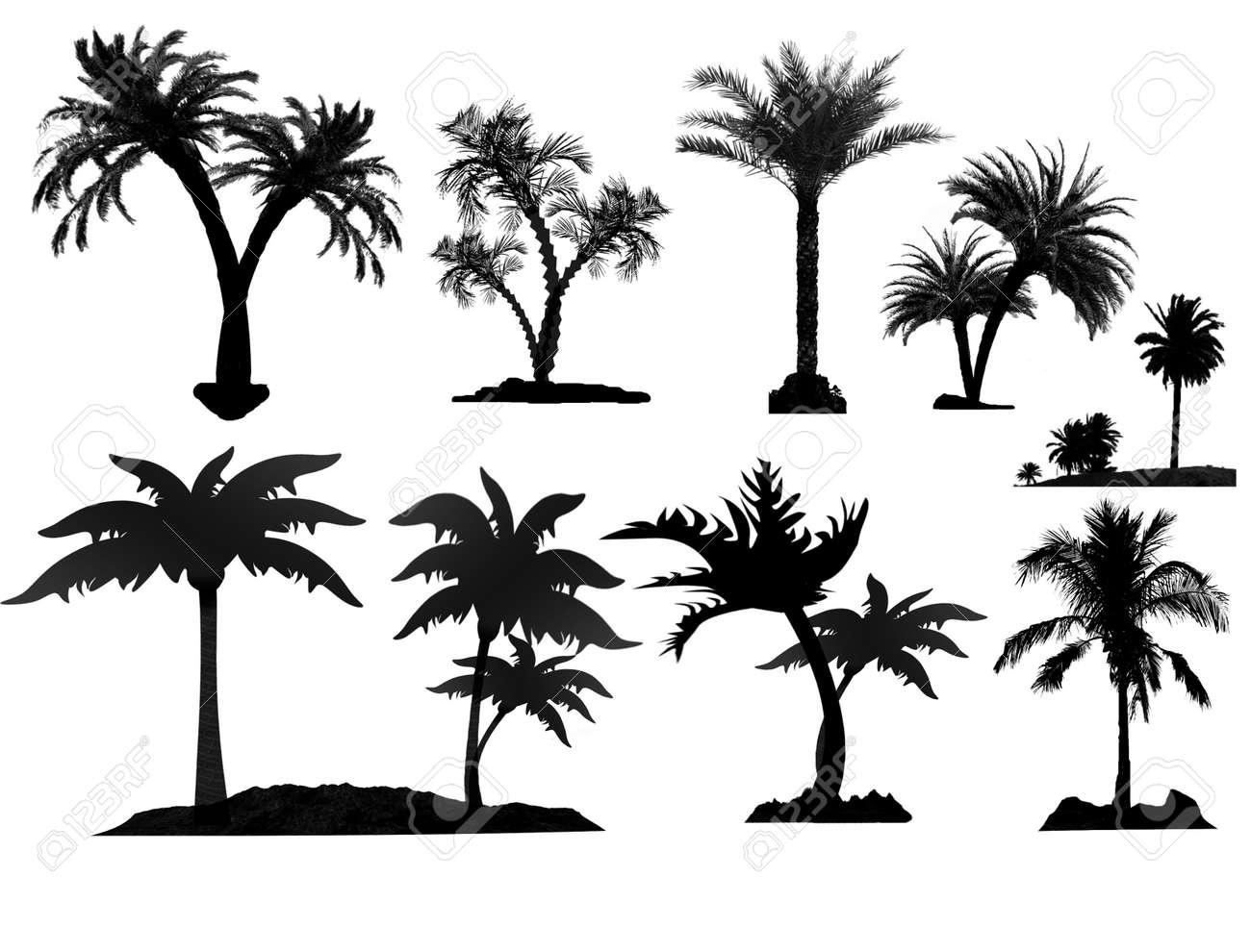 ヤシの木のシルエット ベクトル イラスト白い背景の上のイラスト素材