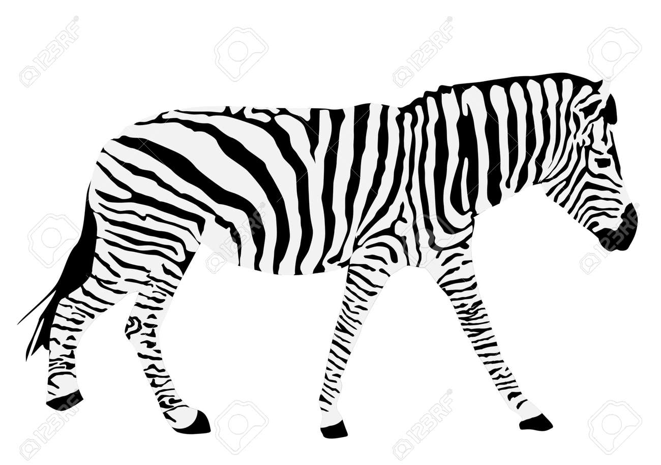 Zebra Head Outline zebra silhouette Animal