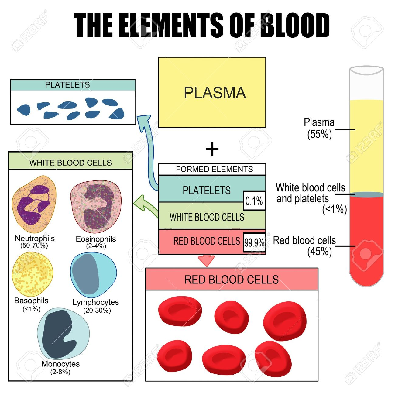 elements of blood diagram elements database wiring diagram elements of blood diagram elements database wiring diagram images