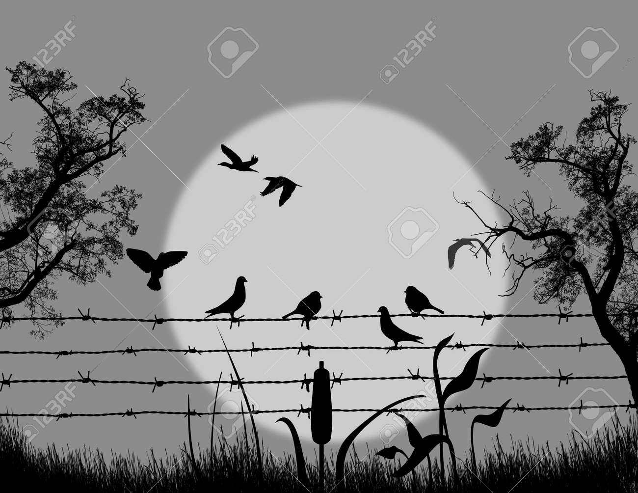 Silhouette Of Birds On Barbed Wire On Beautiful Landscape On ...