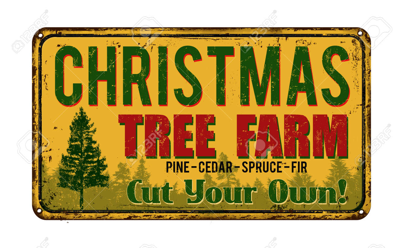 Christmas Tree Farm Vintage Rusty Metal Sign On A White Background