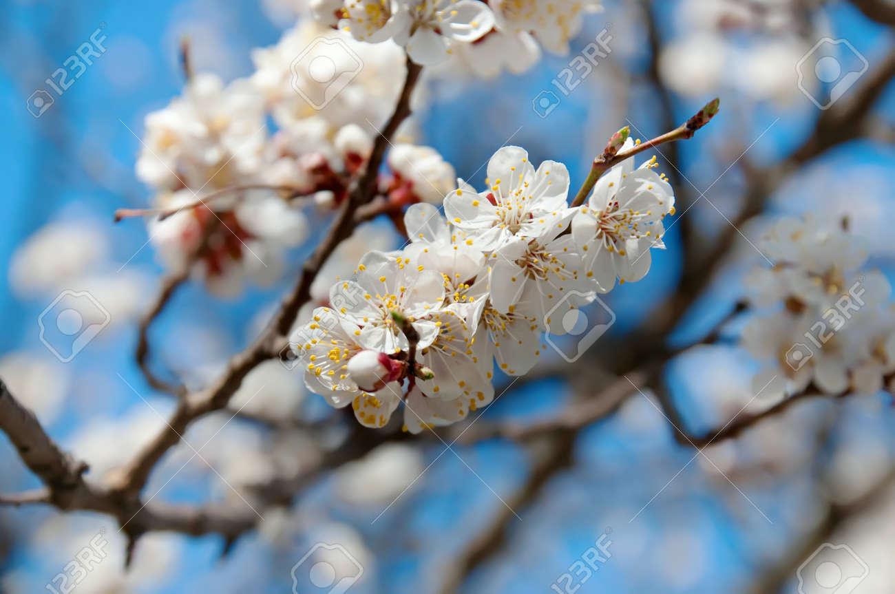 Spring background Stock Photo - 11413517