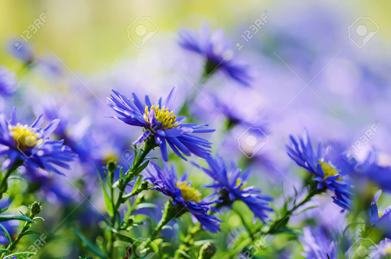 Background From Tender Soft Violet Blue Beautiful Flowers Floral