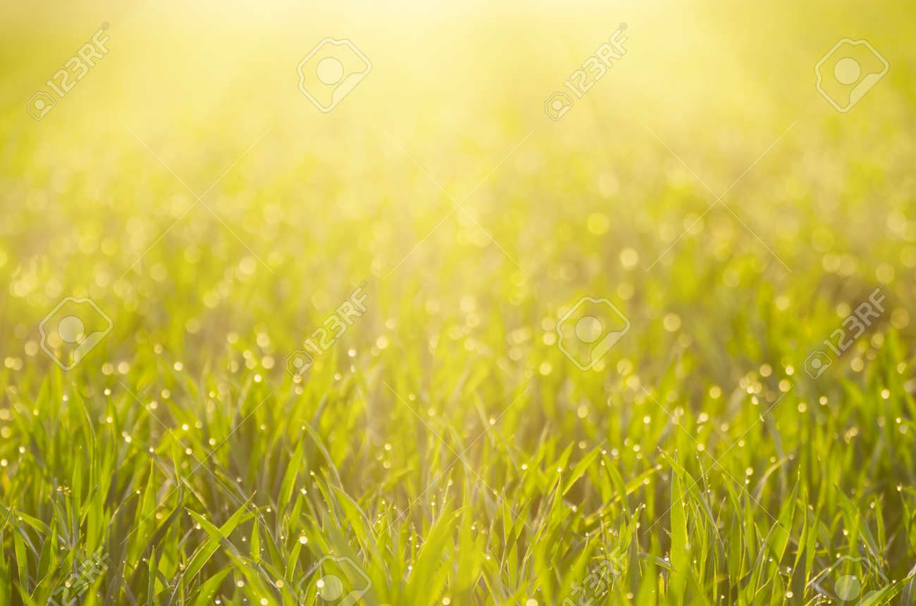 sunny green grass field suitable for backgrounds or wallpapers
