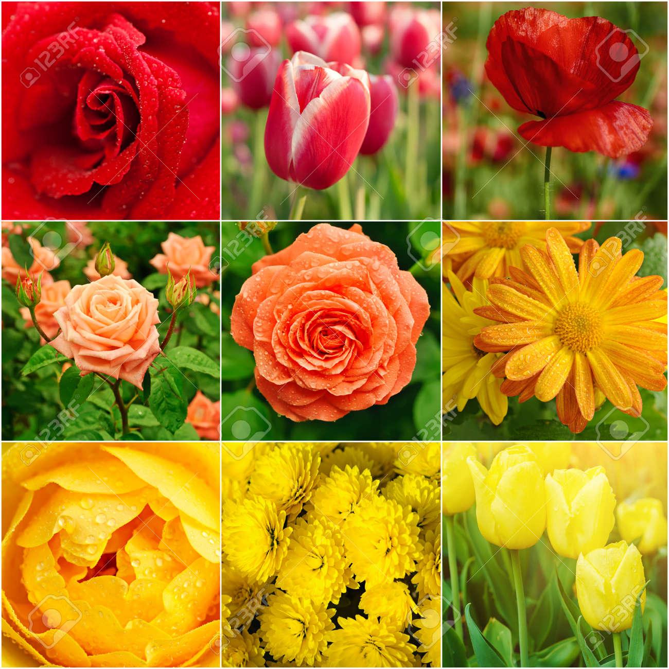 Frühlingsblumen Sammlung In Roten Und Gelben Farben, Natürliche ...