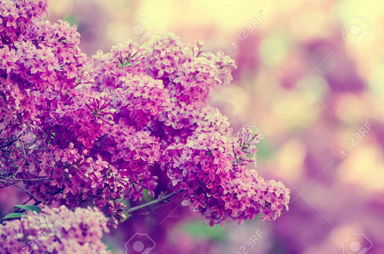 Branch Of Lilac Flowers Floral Natural Vintage Hipster Background
