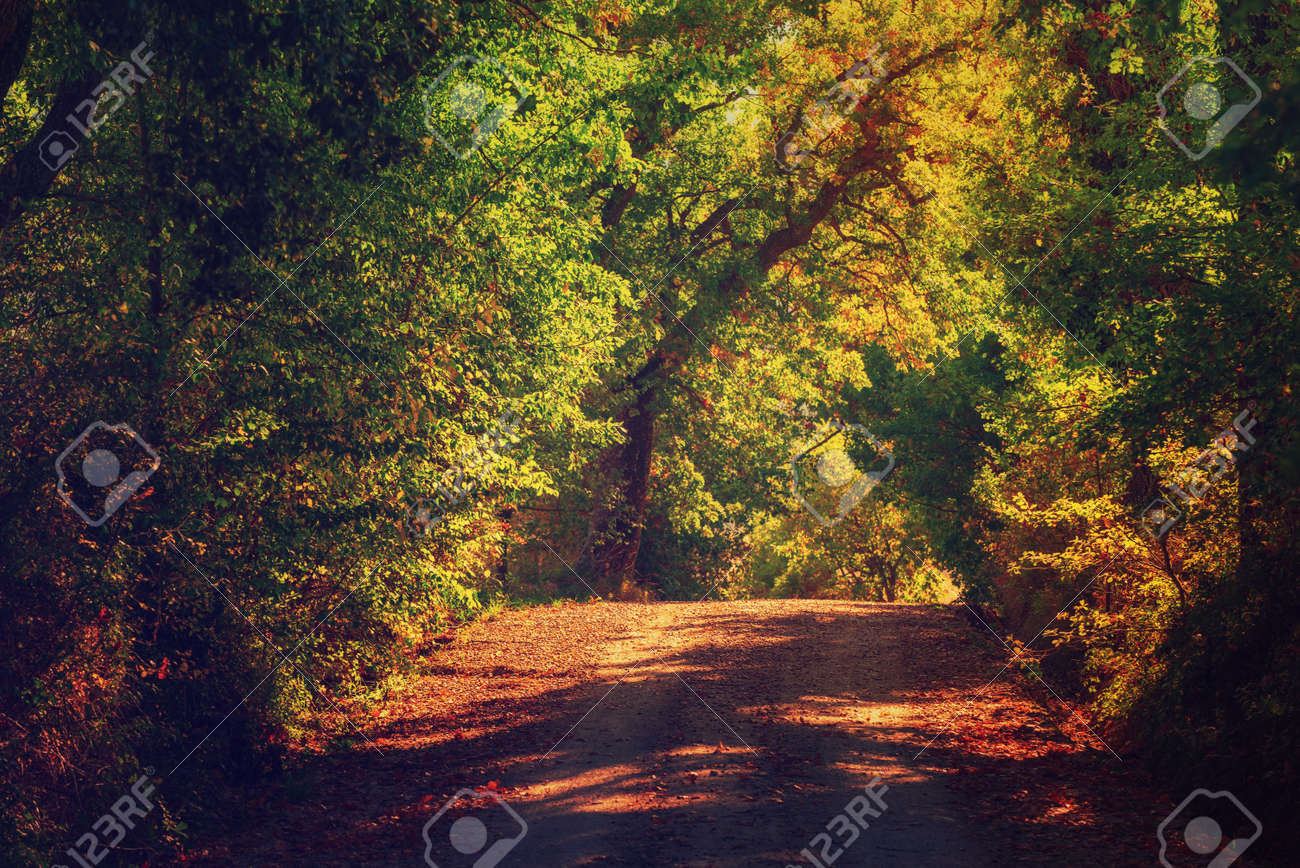 Tunnel from the trees - 128347576