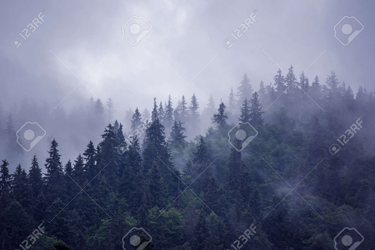 Misty foggy mountain landscape with fir forest and copyspace in vintage retro hipster style - 138723300
