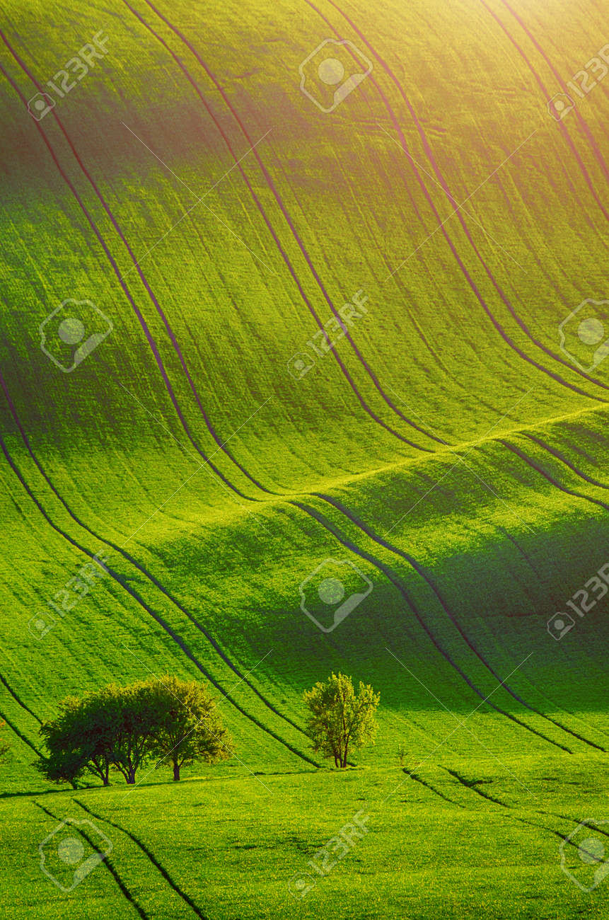 Rolling sunny hills with fields and trees suitable for backgrounds or wallpapers, natural seasonal landscape. Southern Moravia, Czech republic - 151009378
