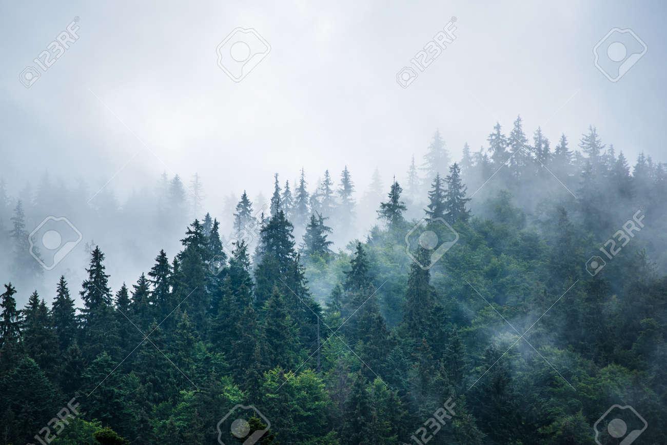 Misty mountain landscape - 154923852