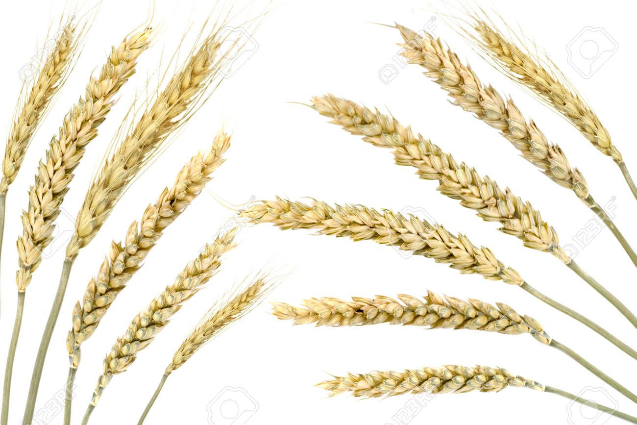 Wheat isolated on white Stock Photo - 4269323