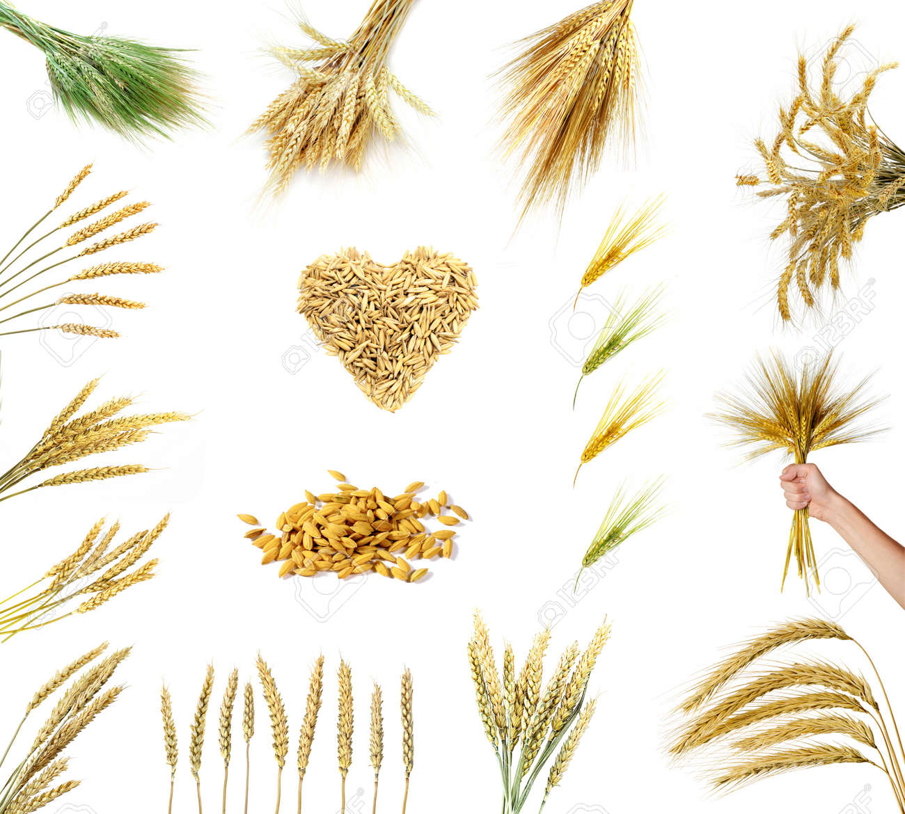 Set of golden wheat ears isolated on white background Stock Photo - 9635295