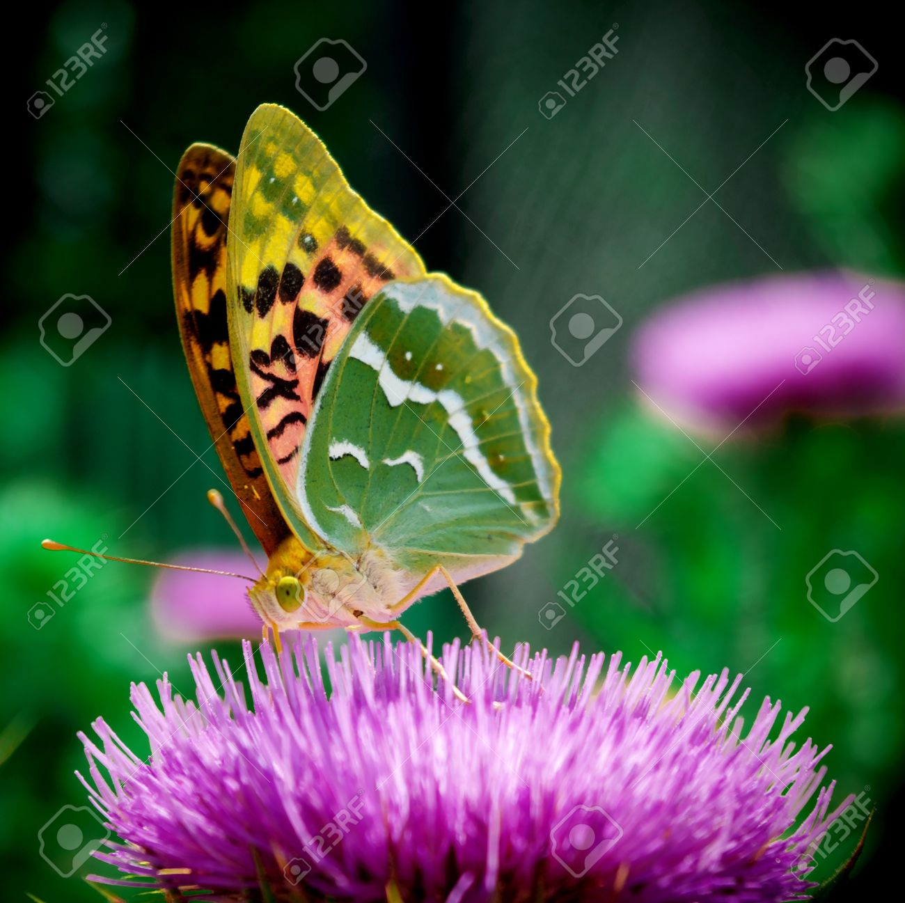 Butterfly On Flower Nature Composition Stock Photo Picture And