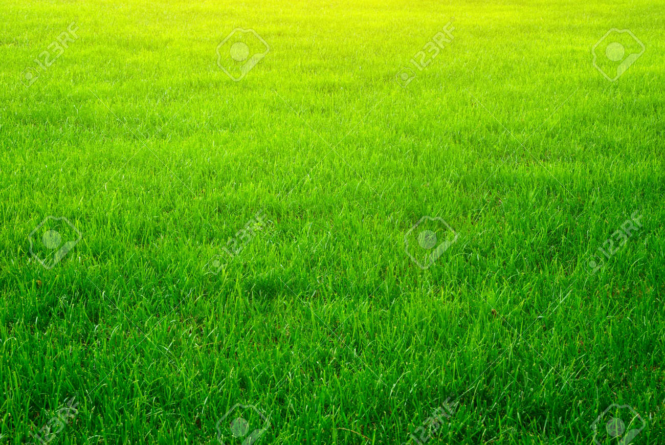 grass background. green grass background texture element of design stock photo 10998551 r