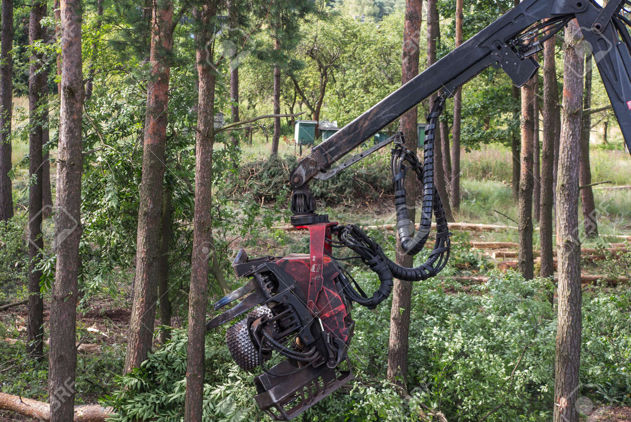 forestry harvester during a job among trees in the forest - 159708180